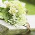 幸福花束-桌面主题