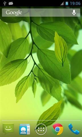 叶子动态壁纸