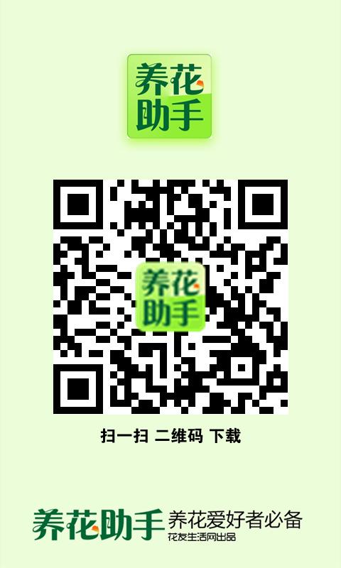 台南花店~太平洋人造花樹(聖誕樹飾品藝品) - 美美網